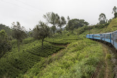 Train going in the tea plantations. Ella, Sri Lanka. Old train going in the green tea plantations. Ella, Sri Lanka stock photos