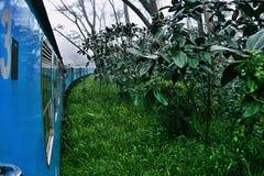 Train in a green rainforest