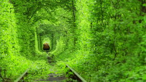 Train in a Green Tunnel of Trees. Ukraine. Summer. Technical train is removed through the green tunnel of trees stock video
