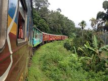 Train in the jungle Royalty Free Stock Images