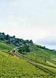 Train in Lavaux Vineyard Terrace at Lake Geneva Alps Stock Photo