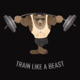 Train like a beast Royalty Free Stock Photos
