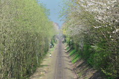 Train line. With blooming trrees Stock Photography