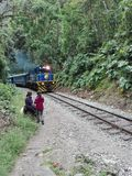 Train MachuPicchu Peru locomotive jungle. A train passes us Stock Photo