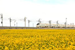The train passes through the canola flower. Here is the Chinese Qinghai Province MenYuan County Stock Image