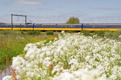 Train passes pasture in Hoogeveen, Netherlands Royalty Free Stock Image