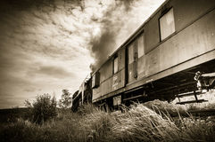 Train. A train passing through the fields full of long grasses stock images