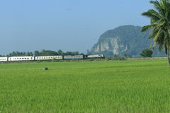 Train passing by paddy field. Scenic view of green paddy field with train passing by in background Stock Image