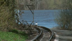 Train paths for transport of children. Children`s railway, crosses a small forest stock video