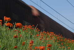 Train and poppies Stock Photo