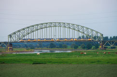 Train on rail bridge. With a meadow with cows in the foreground Stock Photos
