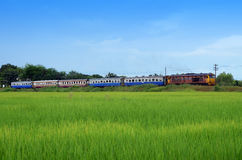 Train and rice field Royalty Free Stock Images