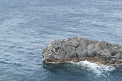 Train rock in southern of Jeju island Royalty Free Stock Images