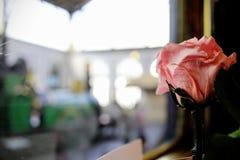 Train rose Stock Photos
