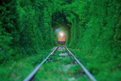 Train run in green. Stock Photography