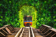 Train running in tree tunnel on the railway in Bangkok Thailand. Stock Photo