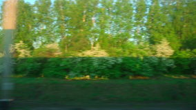 Train shadow. The view from the car of an express train on the morning forest stock video