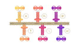 Train subway roadmap timeline elements with markpoint graph think search gear target icons. vector illustration eps10. Train subway roadmap timeline elements vector illustration