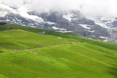 Train in Swiss Alps. Royalty Free Stock Photo