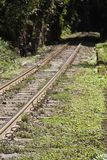 Train Track Dark Forest Stock Photography