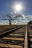Train track with dried tree to the left and plantation of sugar cane to the right with sun facing royalty free stock image