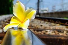 Train Track with Flower Stock Image