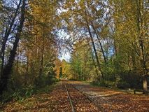 Train track is going away. Autumn fallen golden leafs. Fall park forest royalty free stock image