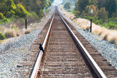 Train tracks Royalty Free Stock Photo