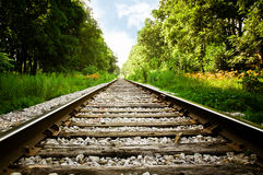 Train Tracks. Edged by trees leading off into the distance royalty free stock photo