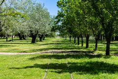 Train tracks crossing the wooded countryside. royalty free stock photos