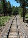 Train Tracks Through a Pine Forest. Train tracks wind through a pine forest Royalty Free Stock Images