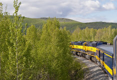 Train traveling through forest Royalty Free Stock Images