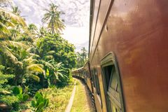 Train trip in Sri Lanka with beautiful views on palms stock photo