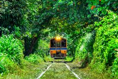 Train through a tunnel of trees in Bangkok, Thailand royalty free stock photography