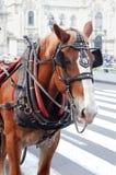 Trainato da cavalli Immagine Stock