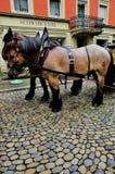 Trainato da cavalli Fotografia Stock Libera da Diritti