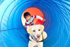 Trained dog Stock Image