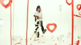 A Trained Dog Jumps. Valentine's Day. Dog jumps leg mistress, decorations in the form of hearts stock video