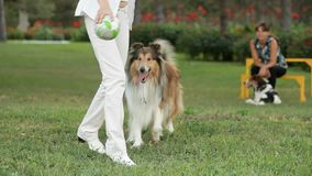 Trained Dog stock footage