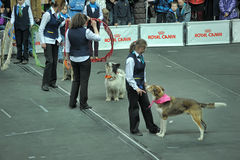 Trained dogs perform at the show  with trainers Royalty Free Stock Photography