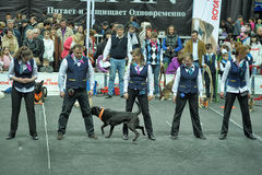 Trained dogs perform at the show  with trainers Royalty Free Stock Photo