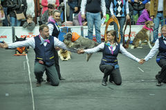 Trained dogs perform at the show Stock Photography