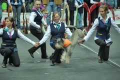 Trained dogs perform at the show Royalty Free Stock Photo