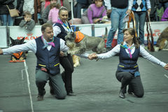 Trained dogs perform at the show  with trainers Royalty Free Stock Images