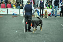 Trained dogs perform at the show Stock Photos