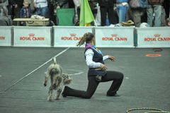 Trained dogs perform at the show Royalty Free Stock Images