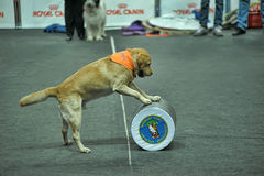 Trained dogs perform at the show Stock Images