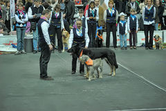 Trained dogs perform at the show  with trainers Stock Images