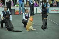 Trained dogs perform at the show  with trainers Royalty Free Stock Image