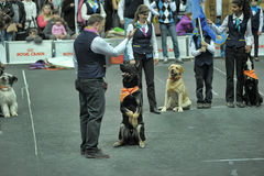 Trained dogs perform at the show  with trainers Stock Image